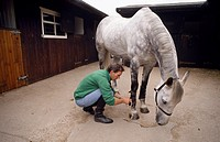 Show jumper Ian Stark tending to his horse Murphy Himself