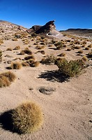 Bolivia highlands Altiplano
