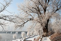 Ice_rimmed trees along Songhua River, Jilin, Jilin Province, China