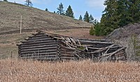 This photo is an old turn of the century log cabin homestead located near Molson, WA on Fletcher Hill that is debilitated with the roof in process of ...