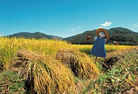 Rice paddy and scarecrow in autumn (thumbnail)