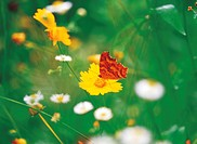 Butterfly and flower (thumbnail)