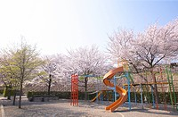 Playground surrounded by blossoming cherry trees, Fujioka, Gumma Prefecture, Japan