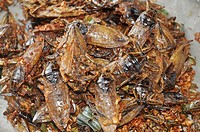 Chiang Saen  (Thailand): fried bugs sold at the market