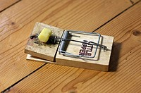 A piece of cheese used as bait in a mouse trap