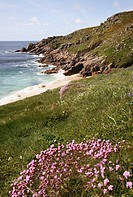 Porthchapel Cove with the sea and beach with pink sea thrift flowers at spring, Cornwall