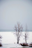 St. Catharines, Ontario, Canada, Trees Along The Shore Of Snow Covered Lake Ontario
