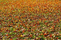 Knoxville, Tennessee, United States Of America, Leaves On The Ground In Autumn