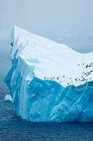 Chinstrap Penguins Pygoscelis antarcticus on an iceberg, Orkney Islands, Antarctica