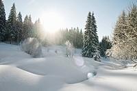 Winter200912
