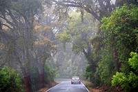 Beautiful road through the Natural Park Sierra Norte de Sevilla. Andalucia, Spain