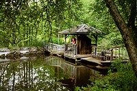 Woman on a wooden bridge by a pond in a forest, elevated view