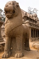 Standing Lion in front of the Draupadi Ratha within the Five Rathas Panch Rathas complex at Mahabalipuram Mamallapuram, UNESCO World Heritage Site, Ta...