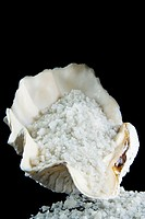 Sea salt in a Tridacna gigas shell