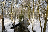 Stream flowing through snow covered woodland habitat, Norfolk, England, december