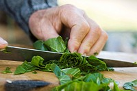 Chopping chard greens