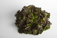 Red Batavia lettuce