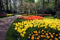 Garden view of colorfull Keukenhof tulip flower park in the Netherlands
