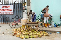 Native man sells coconuts at roadside stand Belize City Belize Central America