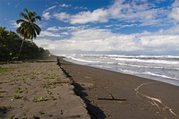 Beach of the Caribbean coast _ Tortuguero
