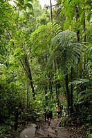 Rainforest _ La Fortuna