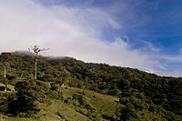 Wet cloud over the rainforest _ Monteverde
