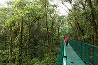 Footbridge over rainforest _ Monteverde reserve