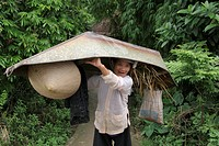 carrying, people, female, vietnam, person, woman
