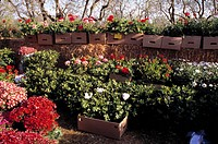 Boxes of plants in commercial nursery garden