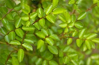 Close_up of Bush