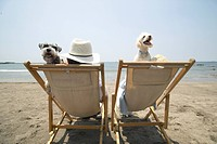 Couple with their dogs at the beach