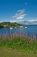 Yachts at anchor in Bay at Connel nr Oban Aergyll & Bute Scotland