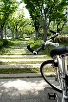 close_up of bicycle in park, Bundang_Gu, Gyeonggi_Do, South Korea
