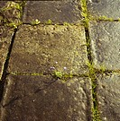 Close_up of stone paving in country garden