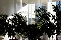 tower, inside, mithun, campbell, downtown, plants