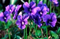 landscape, nature, summer, vegetation, flowers, flora, close_up