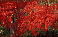 Russia South_East Siberia Ussuriland Far East East Asia Autumn forest Korean_Chinese landscape natur