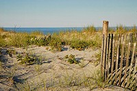Dune grass looks off to the distant ocean, Long Beach Island, New Jersey, USA