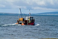 Swanbister Bay SCAPA FLOW ORKNEY Crab Lobster fishermens boat sailing between creels