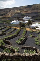 LOS VALLES LANZAROTE White walled house village with terraced fields