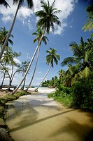 Dominican Republic, Caribbean, Samana Peninsula, El Portillo Beach, beach, palm trees, ocean, river