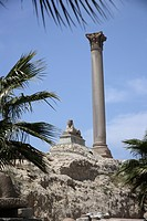 Egypt, Alexandria, Pompey's Pillar and Sphinx