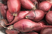 ONION SETS 'RED BARON' READY FOR PLANTING