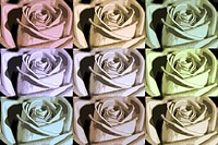 ABSTRACT ROSES IN SOFT PASTEL SHADES