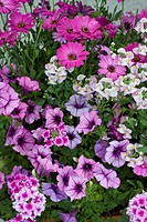 MIXED PATIO CONTAINER PURPLE & PINK THEME
