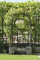 ARBOUR OF VITIS  VINE . MEDIEVAL GARDEN OF WOOD RICHEUX. EURE AND LOIR