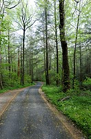 Forest Road, Roaring Forks Motor Nature Trail, Greak Smoky Mountians National Park