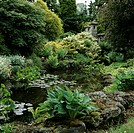 Pond surrounded by luxuriant planting