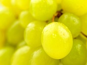 Shot of a cluster of green grapes