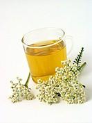Yarrow infusion Achillea millefolium